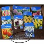 Blumenzwiebeln-150x150 in