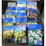 Blumenzwiebeln2015-150x150 in