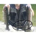 Forelle-150x150 in Fisch und Co auf dem eigenen Grundstück räuchern? Mit einem Räucherofen kein Problem
