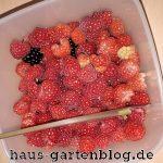 Gartenernte-150x150 in Vegane Fruchtgummis selber machen