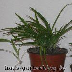 Gr Nlilie-1-150x150 in Pflegeleichte Zimmerpflanzen für jedermann