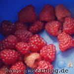 Himbeeren-150x150 in Sommerrückblick 2017 im Gartenblog