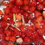 HimbeerenZitronengras-150x150 in Vegane Fruchtgummis selber machen