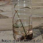 Lotosbecher-150x150 in Wochenrückblick im Gartenblog KW 20/17