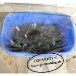 Minigewaechshaus-150x150 in Wochenrückblick im Gartenblog KW 09/17