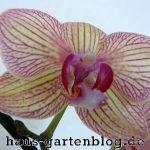 Orchidee-150x150 in Pflegeleichte Zimmerpflanzen für jedermann