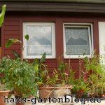 Pflanzen-1-150x150 in Garten winterfest machen - So geht`s