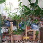 Pflanzen2-150x150 in Garten winterfest machen - So geht`s