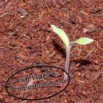 Tomate-150x150 in Wochenrückblick im Gartenblog KW 10/17