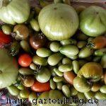 UnreifeTomaten-150x150 in Was tun mit unreifen Tomaten?